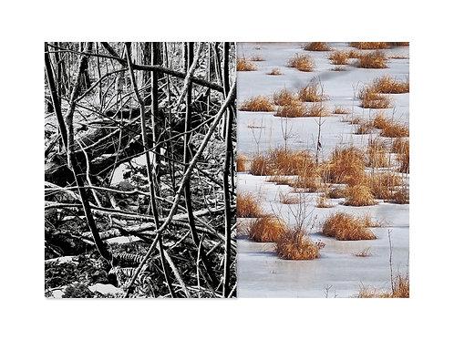 Tangled Texture I Amanda Russo Rubman