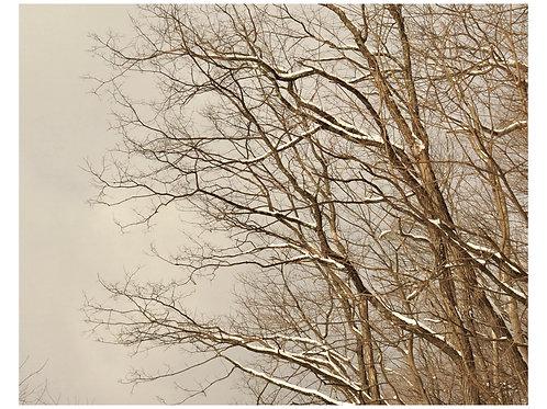 Winter I Amanda Russo Rubman