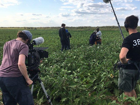 in the fields of Astrakhan