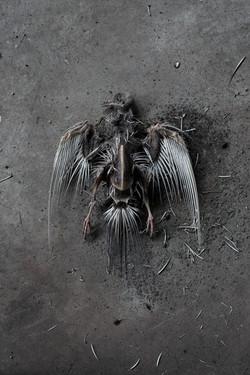 Bird 2-1.jpg