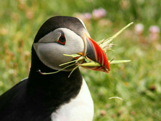 Budget accommodation for Puffins and Orca spotting in Shetland