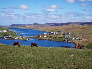Book your 2021 Shetland adventure