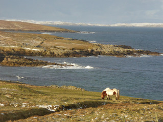 A dusting of snow in Shetland