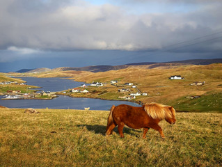 Shetland winter light
