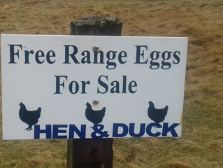 Budget self catering accommodation in Shetland