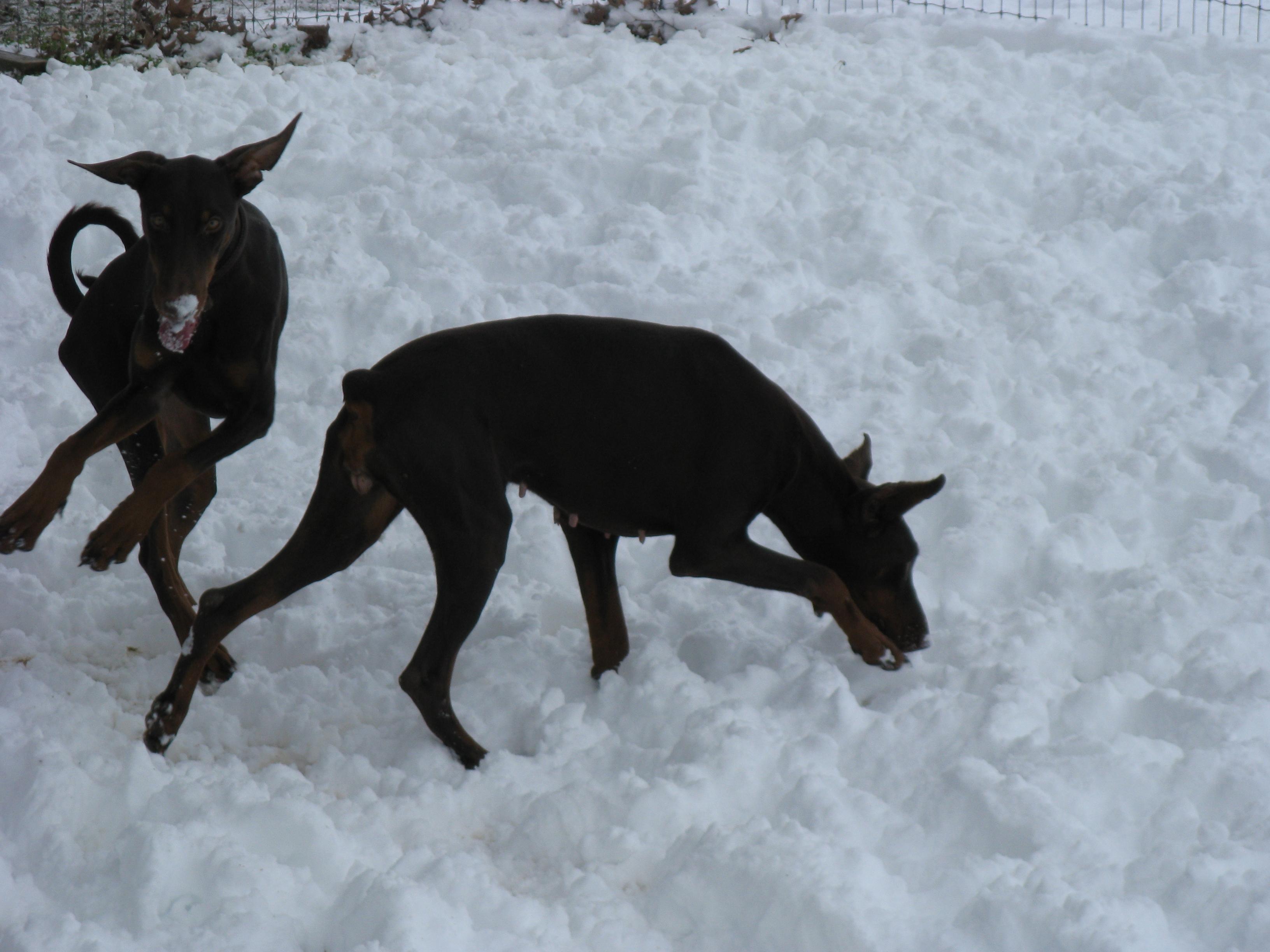 Snow+Day+034.JPG