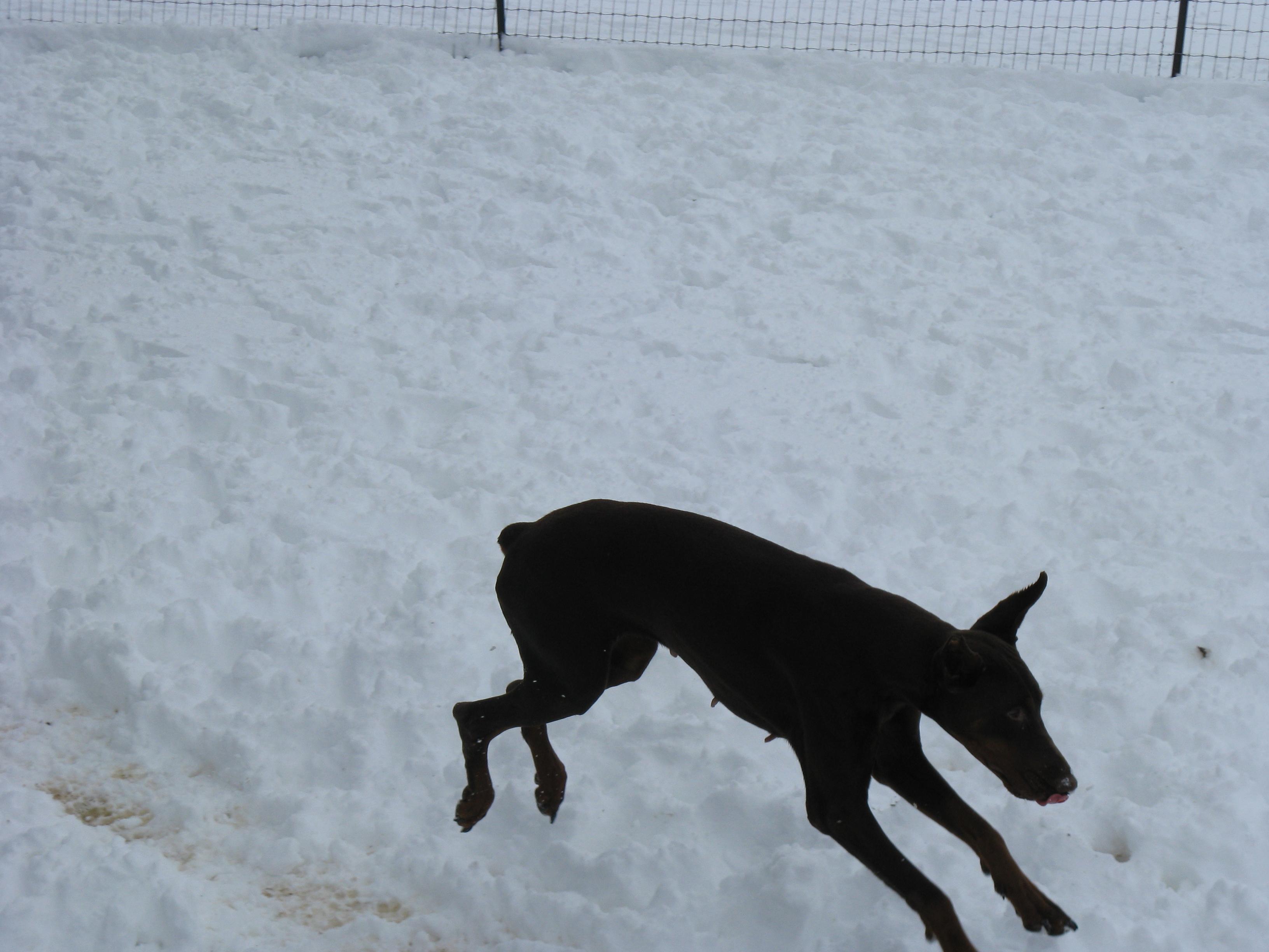 Snow+Day+037.JPG