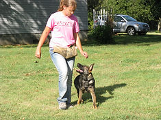 unleashed, training, dog, off leash, dexter, mo, cgc, akc, puppy, train, unleashed dog training, doberman, shepherd, gsd, therapy, ipo, igp, schutzhund, protection, canine, k9, dog trainer, bite, obedience, obedient, tricks, service dog, jumping, pulling, nipping, barking, beauceron, semo