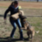 unleashed, training, dog, off leash, dexter, mo, cgc, akc, puppy, train, unleashed dog training, doberman, shepherd, gsd, therapy, ipo, igp, schutzhund, protection, canine, k9, dog trainer, bite, obedience, obedient, tricks, service dog, jumping, pulling, nipping, barking, beauceron