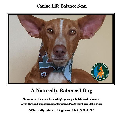 Canine Intolerance Scan, Nutrition Panel, and Specialist
