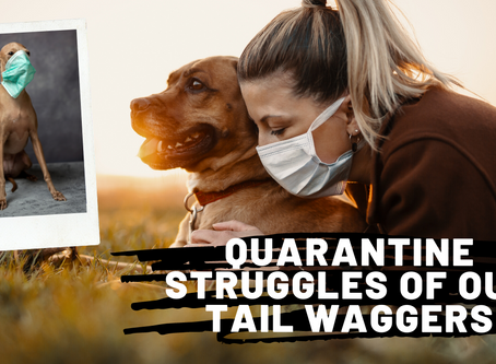 Quarantine Struggles of Our Tail Waggers
