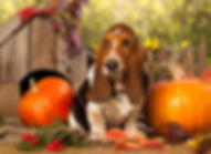 Super Foods for dogs Digestion