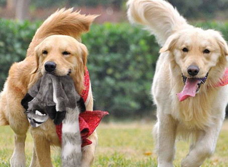 Canine Essential Balance