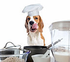 dog-cook-treats_pxd8pr.jpg