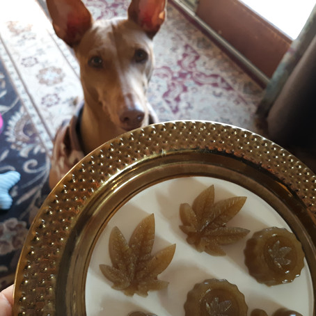 Why Gelatin is great for dog health