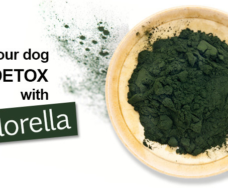 Chlorella Dog
