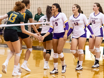 UAlbany Volleyball Favored To Win America East Again
