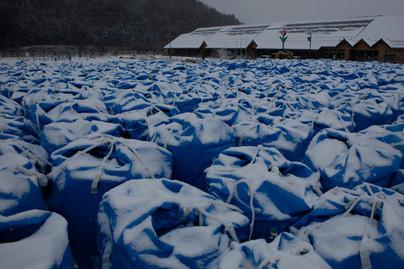 20120111_Fukushima16.jpg