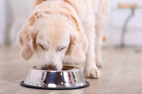alimentazione-casalinga-barf-cani