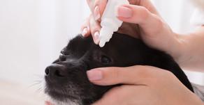 3 prodotti di pronto soccorso se a casa hai un cane o un gatto