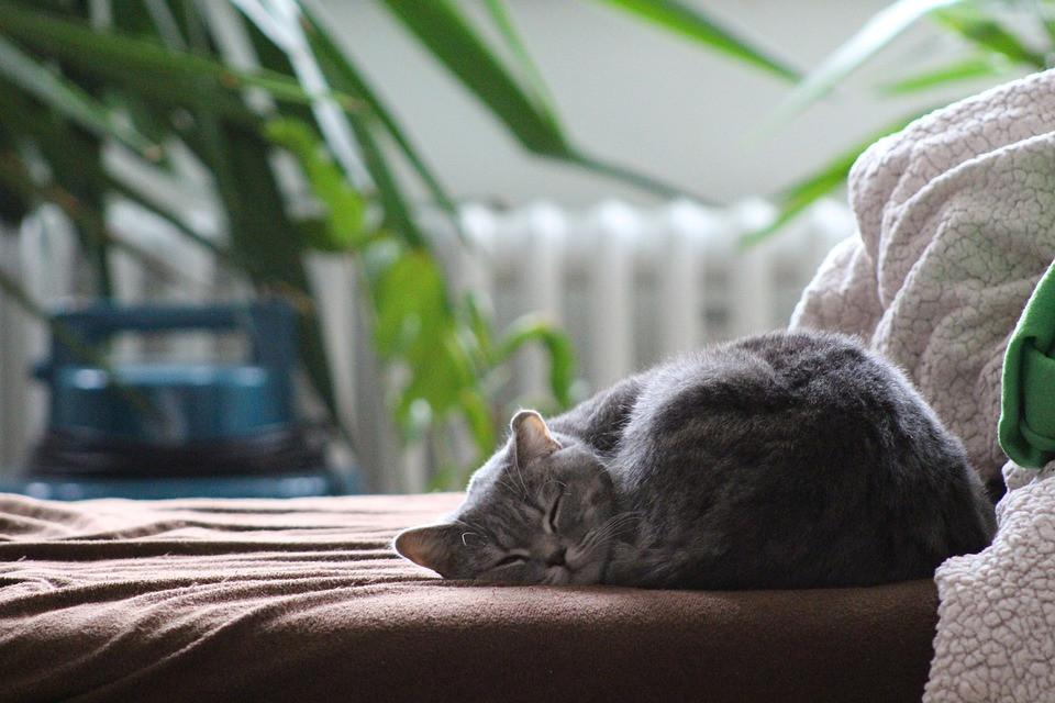 integratori-gatto-anziano