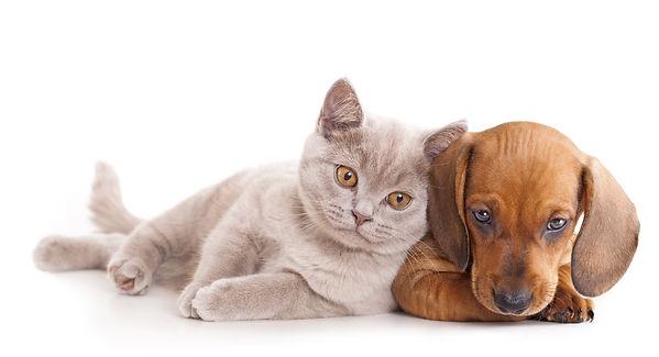 Prodotti naturali e biologiciper cane  gatto
