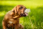 contatti euro service prodotti naturali per animali