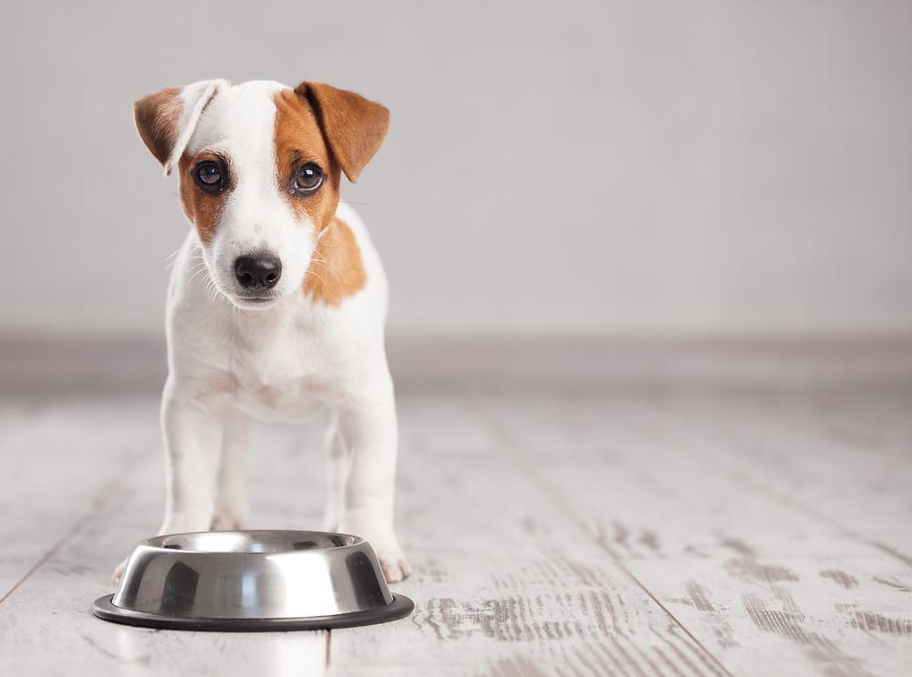 il mio cane non mangia