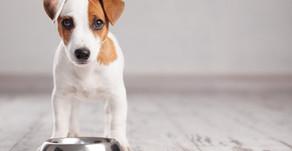 """""""Il mio cane non mangia"""" cosa c'è da sapere?"""