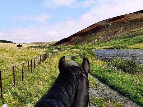 Pentland ponies Whispa Pentland Hills hacking