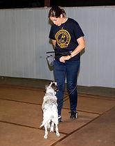 Canine 11.jpg