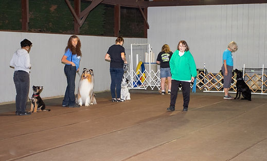 Canine 4.jpg
