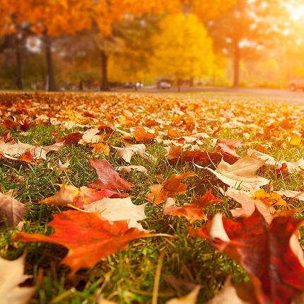 leaves-falling-early.jpg