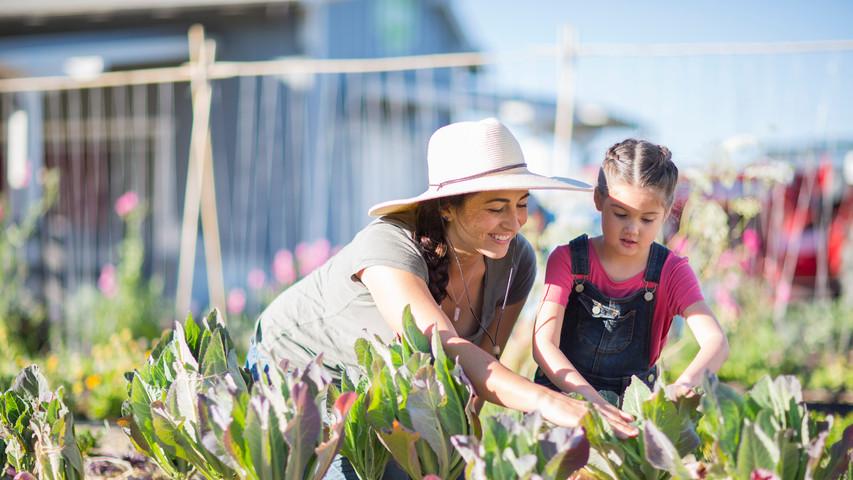 community-farm-and-garden