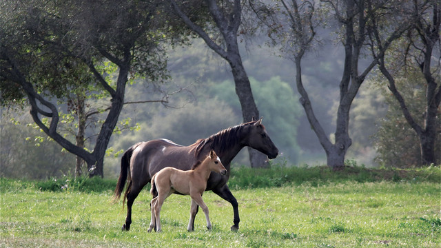 the-ranch-horses-rodeo