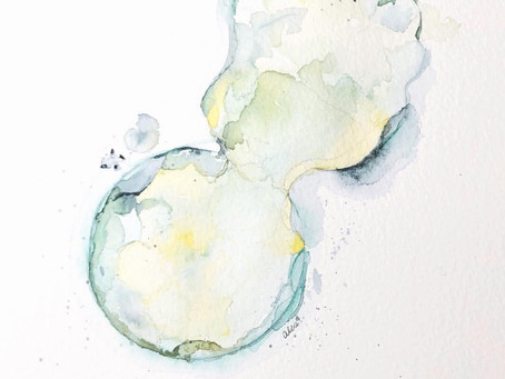 Embryo Watercolor Paintings