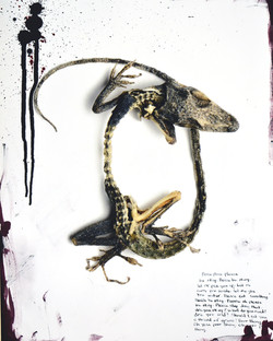 Prayer for a Dying Lizard