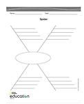 Spider Map PDF