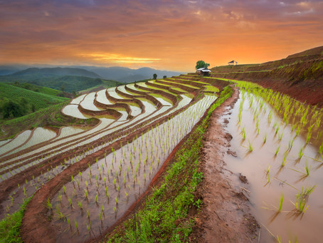 Module 7: Ancient Chinese Agriculture & Livestock