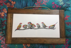 Red Brow Finches