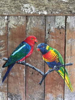 King Parrot...
