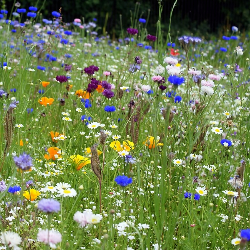 Pollinator Meadow Planting Day