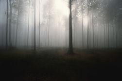 Foresta Mist