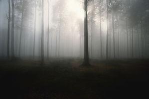 Mist forêt