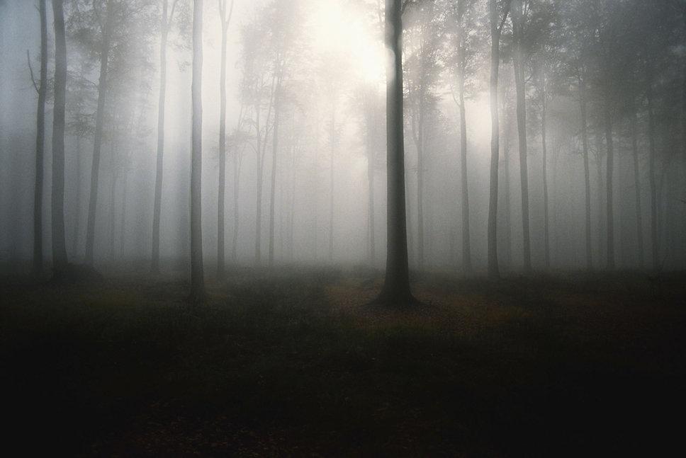 Eleganta background woods