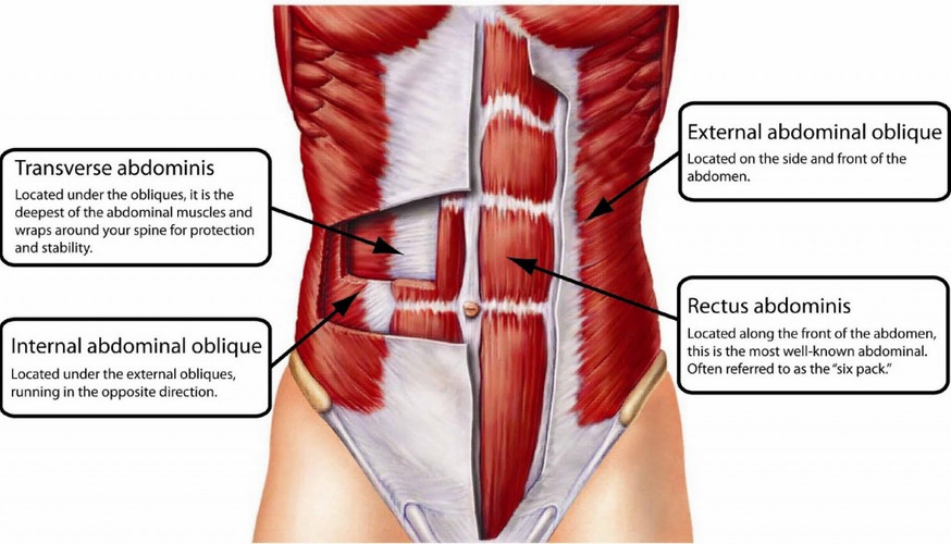 abdominal-muscles-anatomy-1024x585.jpg