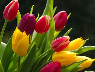 Flowers - Symbolising nature!