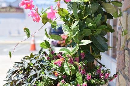 Landscape Management | Sequoia Outdoor Living on Sequoia Outdoor Living id=30764