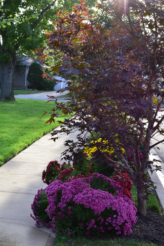 Landscape Management | Sequoia Outdoor Living on Sequoia Outdoor Living id=35449