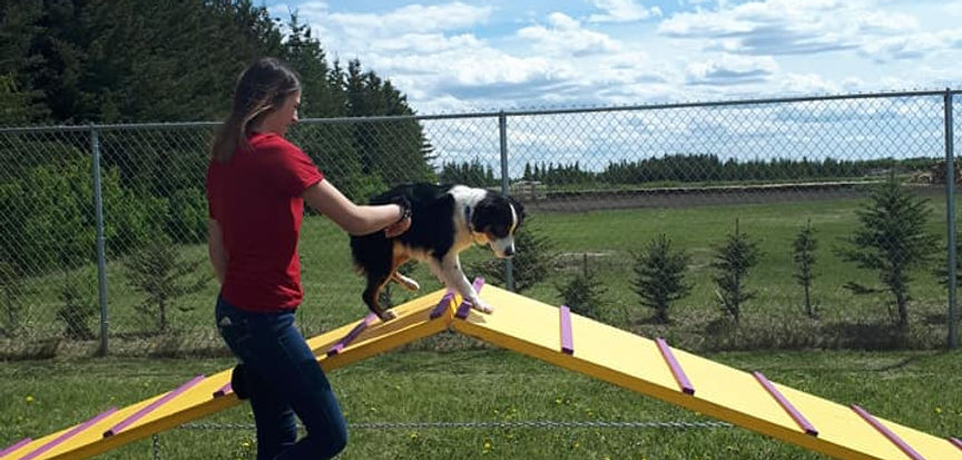 happy dog learning new tricks at The Place 4 Paws having fun with dog agility